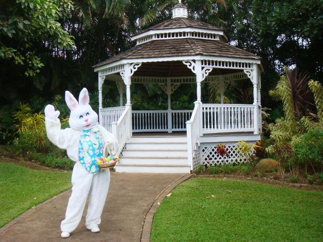 funny bunny pics. The Funny Bunny Story