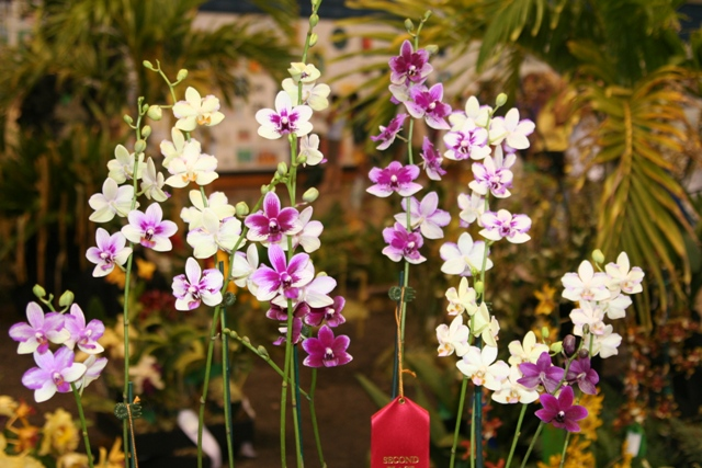orchids On Maui