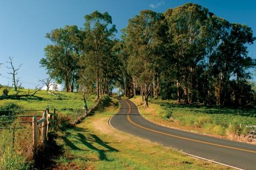 country road, ulupalakua, upcountry maui