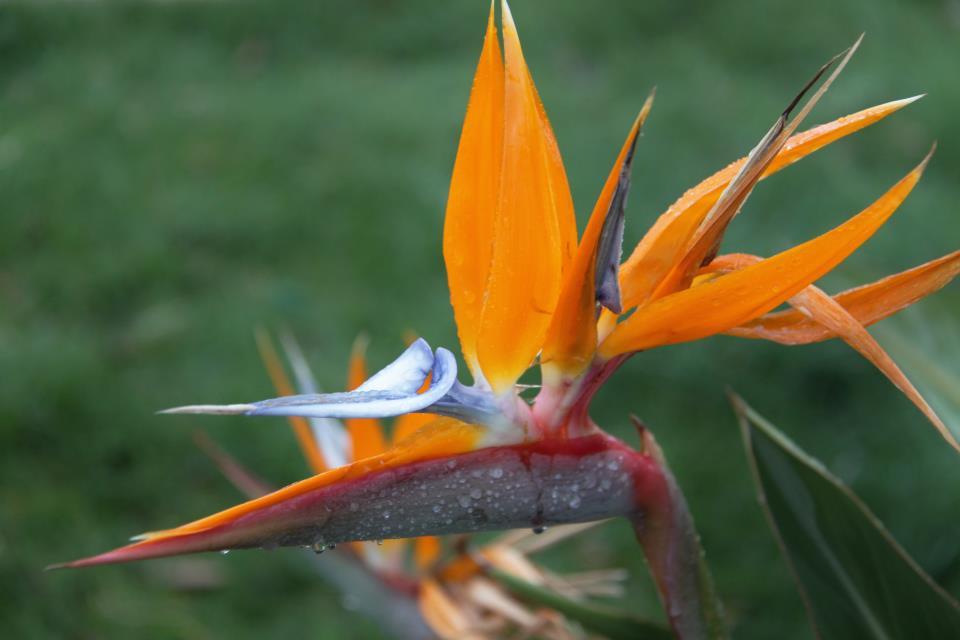 maui exotic flower