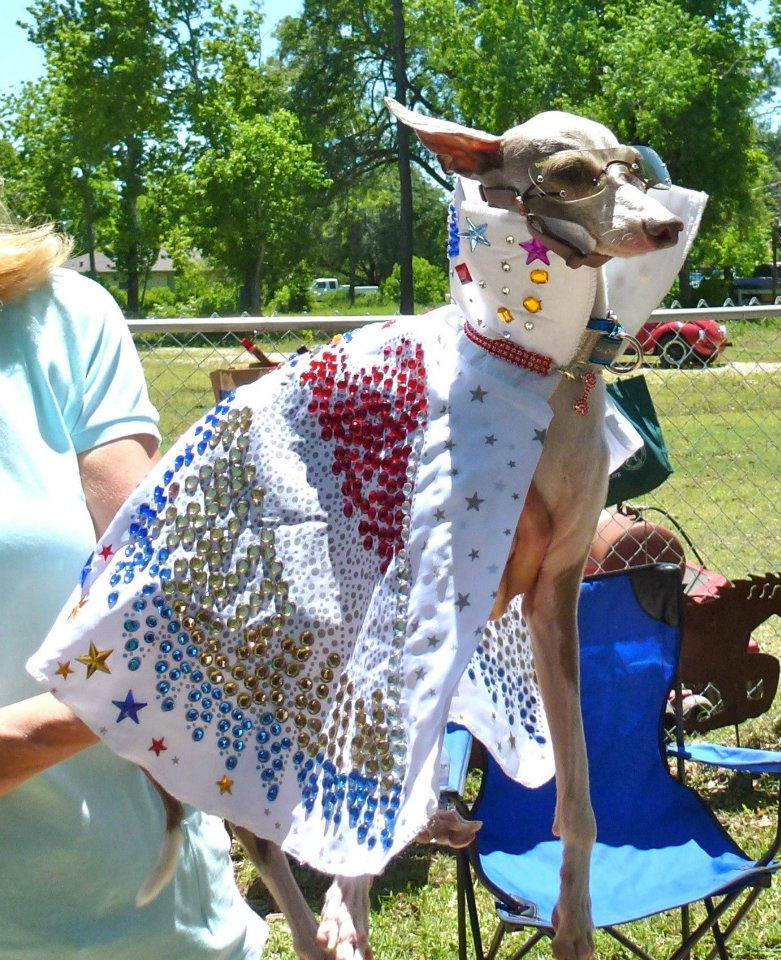 Italian Greyhound Rescue