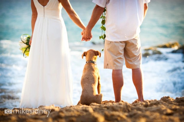 At Gorgeous Maui Weddings You Will Find Inspiration Creative Ideas Destination Wedding Fashion Real Vendor Spotlights As