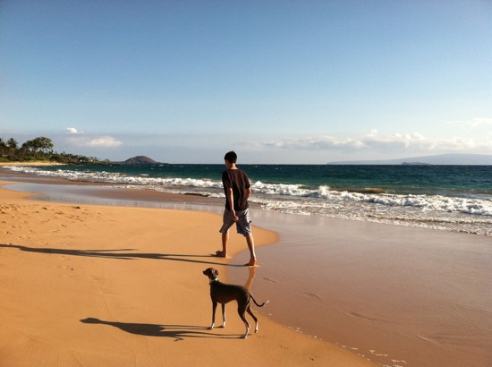 Italian Greyhound on Maui