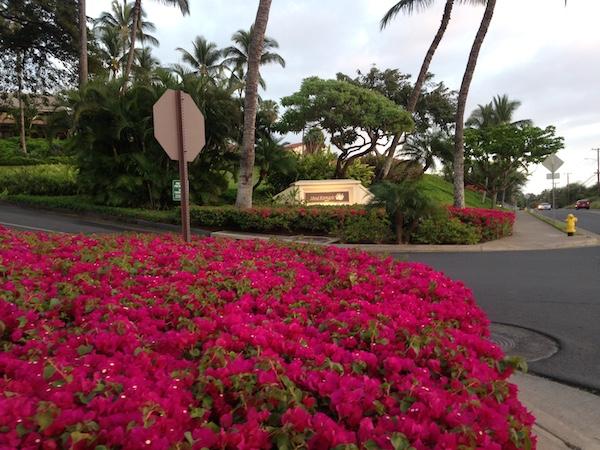 Maui Sunset Kihei   9