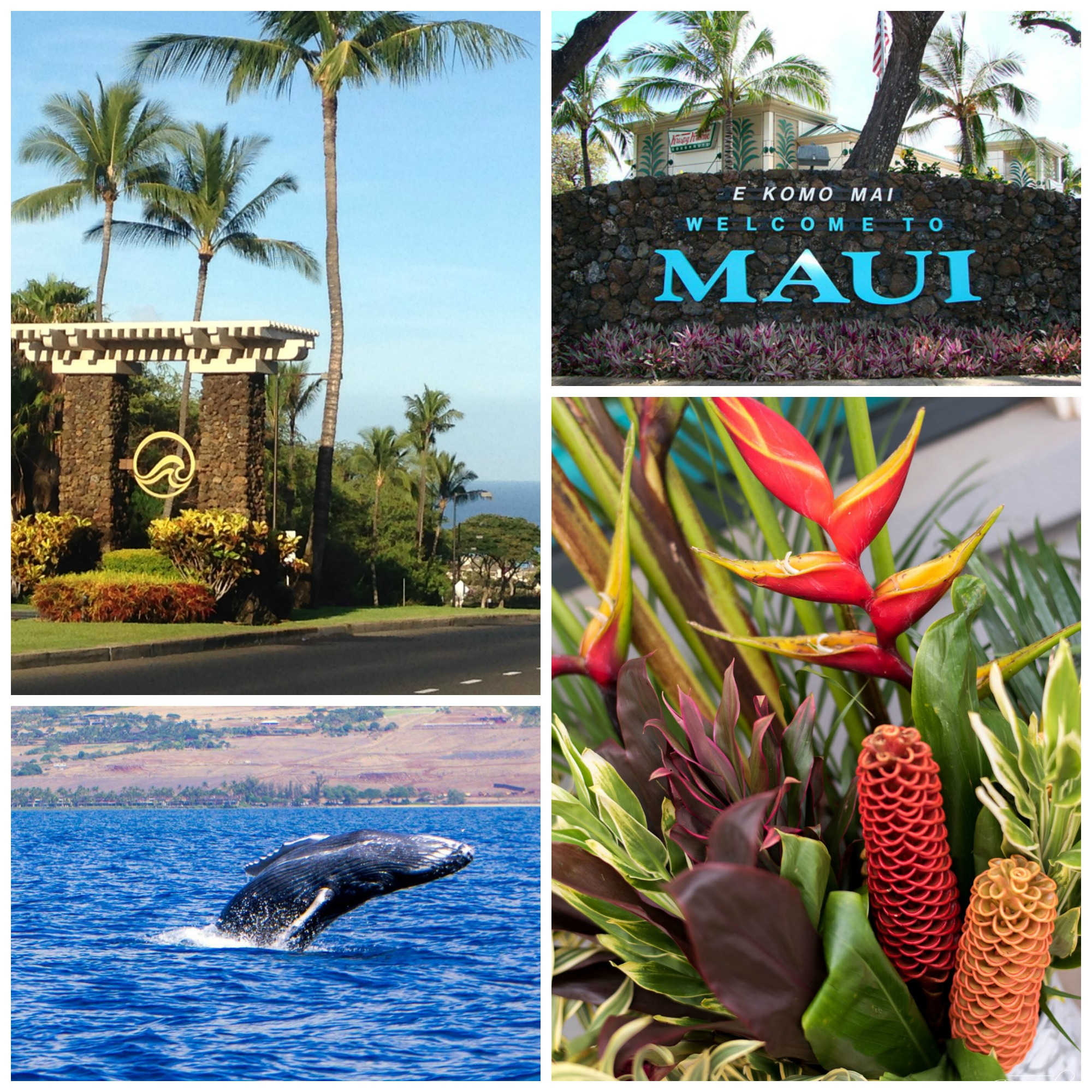 welcome-to-maui