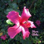 ShareAloha
